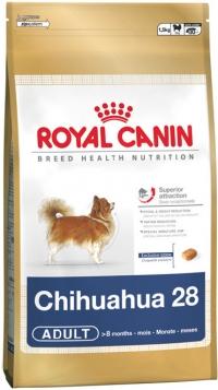 Chihuahua (Чихуахуа)